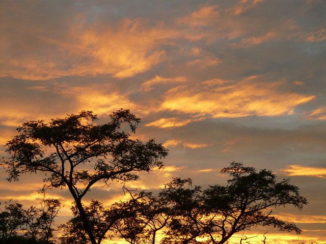 Mapeando as florestas nos biomas áridos