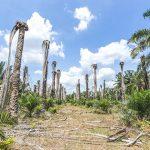 Grande empresa que comercializa óleo de palma promete proteger florestas
