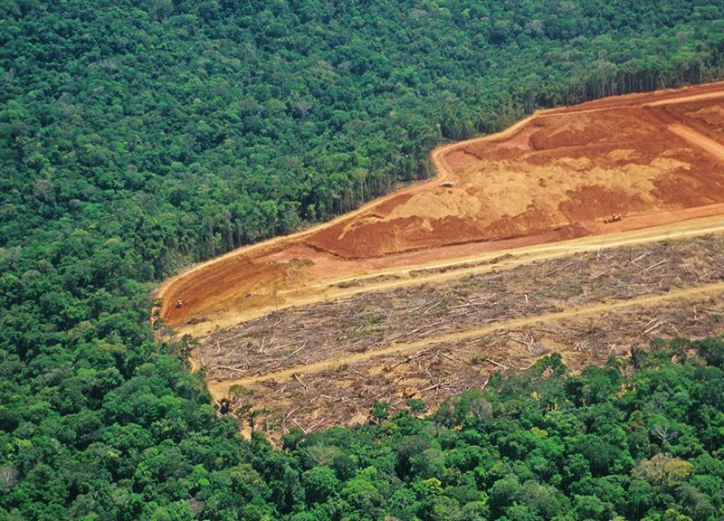 Indústria da carne na Europa ameaça florestas na América do Sul