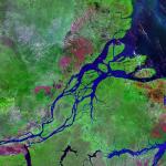 Corais da Amazônia poderiam estar ameaçados com exploração de petróleo
