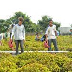 Primeira escola sustentável da América Latina