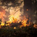 Grécia avalia causas de incêndio e erros na evacuação, após tragédia