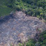 Desmatamento na Amazônia brasileira aumenta 13,7% no último ano