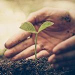 Preservar os solos deve ser prioridade, alerta FAO