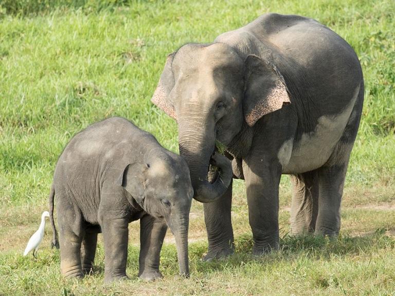 Índia abre seu primeiro hospital para elefantes