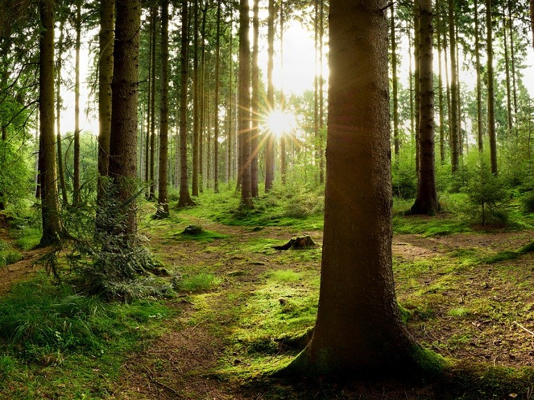Criado sistema capaz de monitorar o crescimento das florestas
