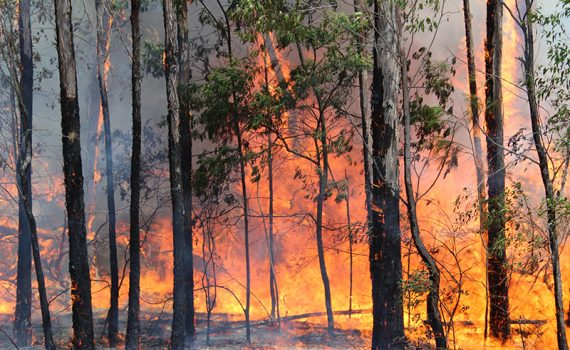 Conferência Internacional sobre Incêndios Florestais recebe propostas