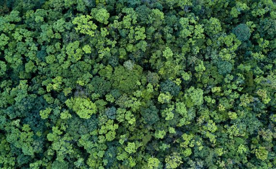 DIA MUNDIAL DO MEIO AMBIENTE: projetos sustentáveis