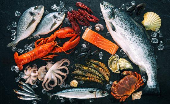 Pesca sustentável para alimentar a população do futuro