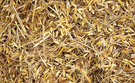 Cascas e talos do arroz se transformam em lâminas