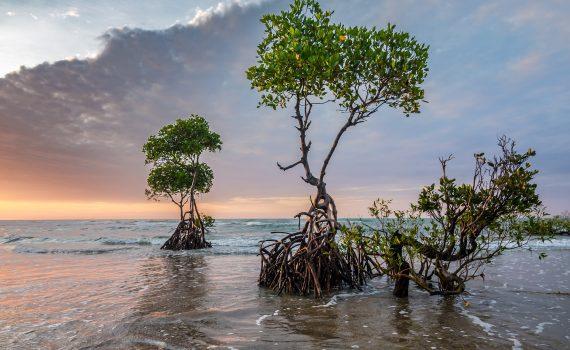 Projeto recupera manguezais em Cuba