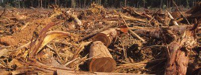 funiber-desmatamento-amazonia