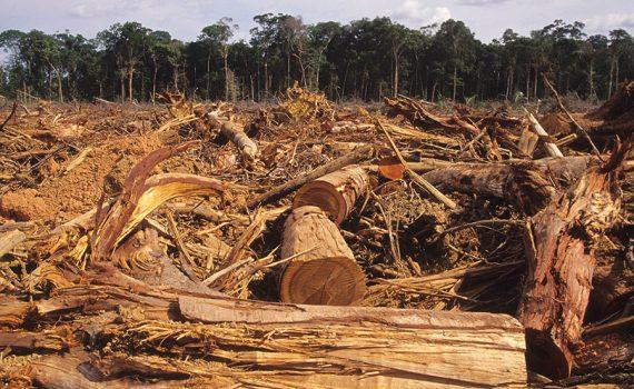 Carne e soja provocam aumento de desmatamento na Amazônia brasileira