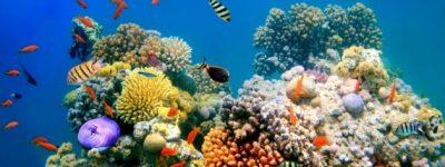 funiber-barreira-corais