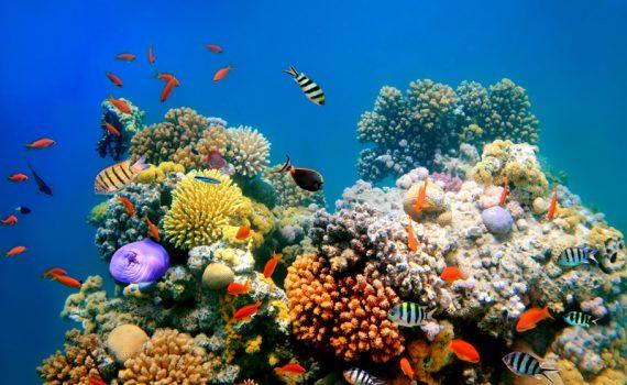 A Grande Barreira de Corais da Austrália em perigo