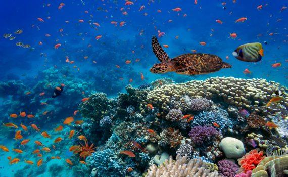 Iniciativa global para limpar os oceanos