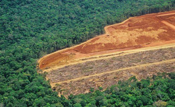 Vendem-se terrenos na Amazônia, nas redes sociais