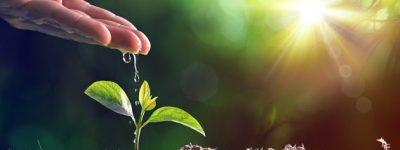 funiber-eucalipto-meioambiente
