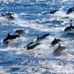 delfines 150x150 Estilo de vida influye en la pérdida de estatura en ancianos.