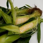 Francia prohibe el uso de maíz transgénico