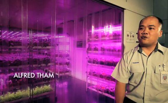 Fábricas de alta tecnología se transforman en granjas