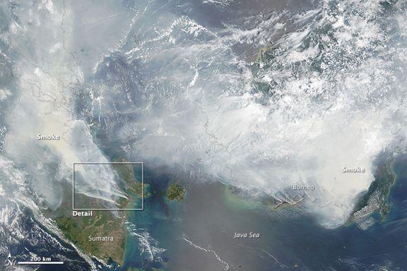 funiber-indonesia-borneo incendio forestal