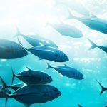 Crean método fluorescente para detectar mercurio en el pescado