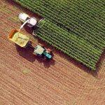 Medidas que podrían mitigar los efectos de la agricultura en España