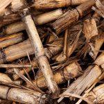 Congreso reunirá especialistas en biomasa y bioenergía