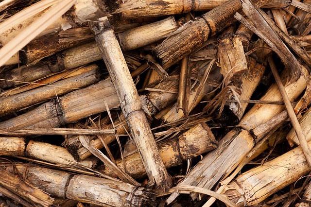 funiber-biomasa-energia