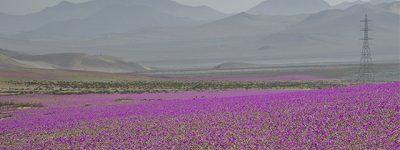 31_Atacama