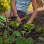 Agricultura urbana favorece el desarrollo sostenible de las ciudades