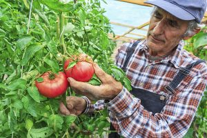 huertos-sociales-alimentos-ancianos