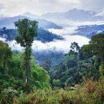 Presidente de Ecuador lanza programa para la conservación ambiental del país