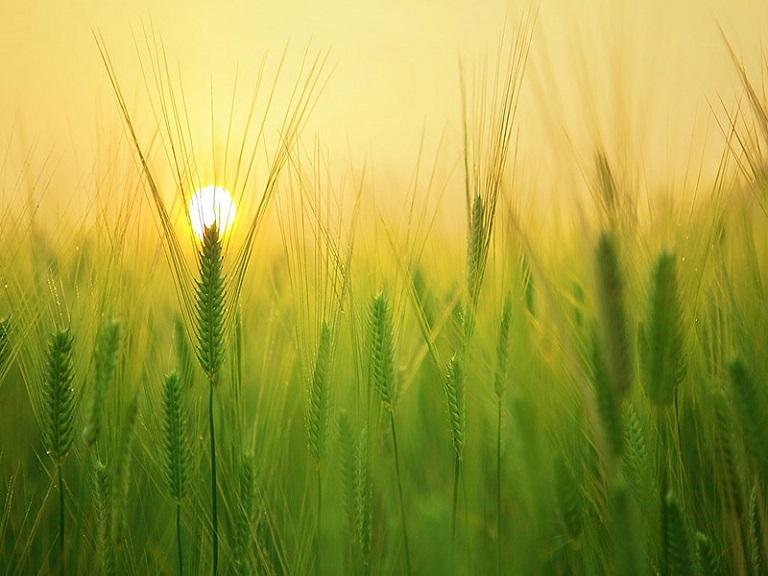 Rendimiento de la energía solar en el campo