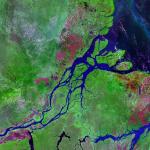 Corales de Amazonia podrían estar amenazados por exploración de petróleo