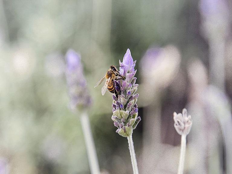 Para salvar a las abejas, Europa prohíbe uso de insecticidas