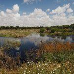 Deuda de uno de los mayores desastres ambientales en España