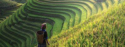 funiber-arroz-valor
