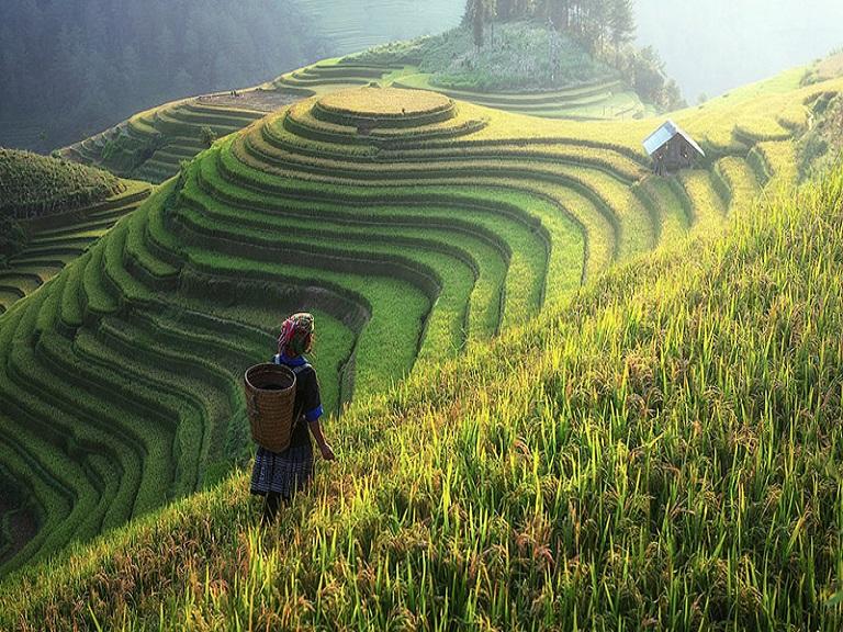 Niveles elevados de CO2 afectan el valor nutritivo del arroz