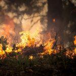 Tras tragedia, Grecia evalúa causas de incendio y errores en evacuación