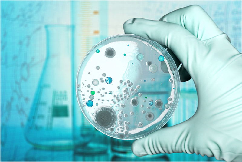 Analizan los alimentos de América Latina para la creación de probióticos