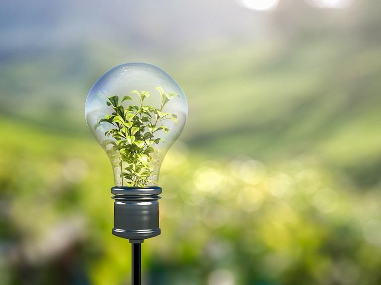 Una empresa española idea una forma de extraer electricidad de las plantas