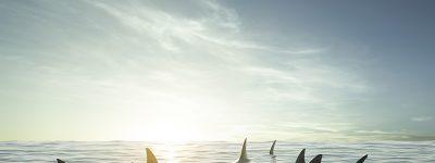 funiber-barbatana-tubaroes