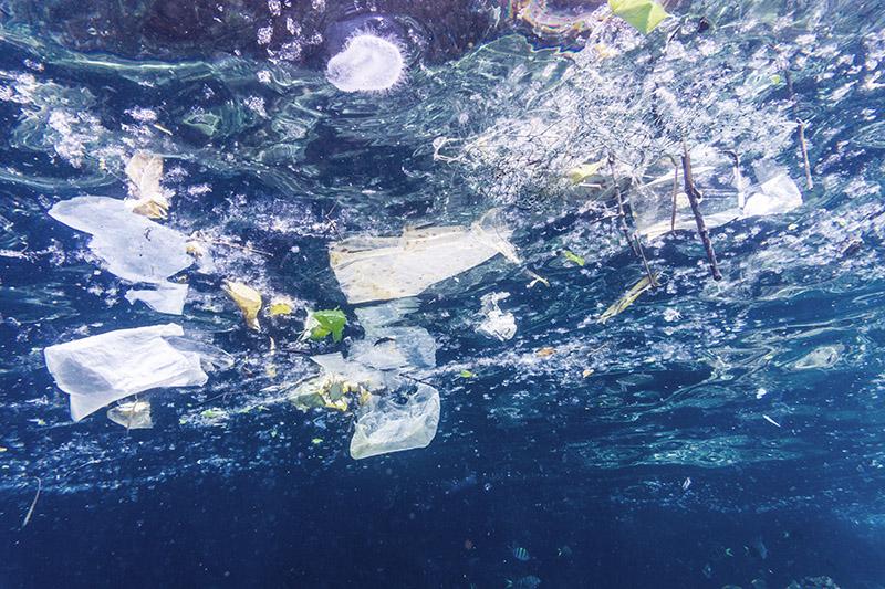 En Europa, las organizaciones ecológicas conmemoran el resultado de la votación del Parlamento Europeo sobre la directiva que prohíbe plásticos desechables