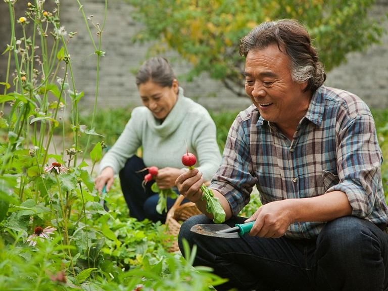 La horticultura, una actividad beneficiosa para los adultos mayores