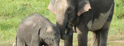 funiber-hospital-elefantes
