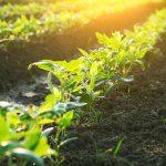 Europa defiende la financiación agraria para luchar contra el cambio climático