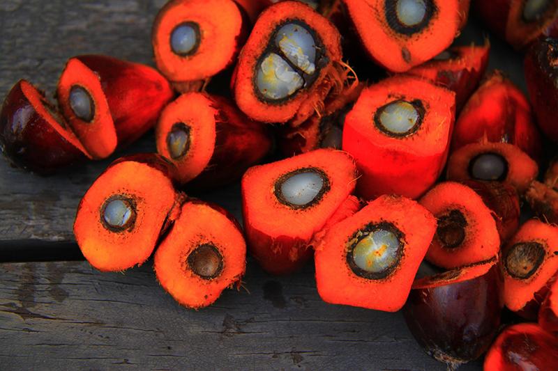 La Comunidad Europea debate el uso del aceite de palma con biodiesel