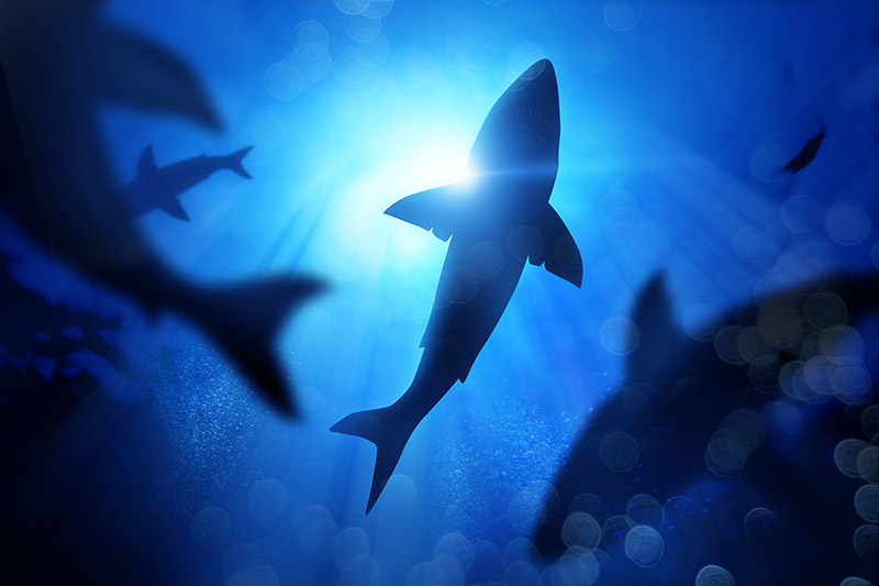 La mala fama y la pesca amenazan a los tiburones